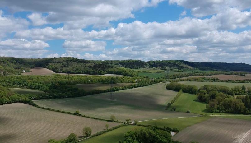 Vineyard Planting & Establishment