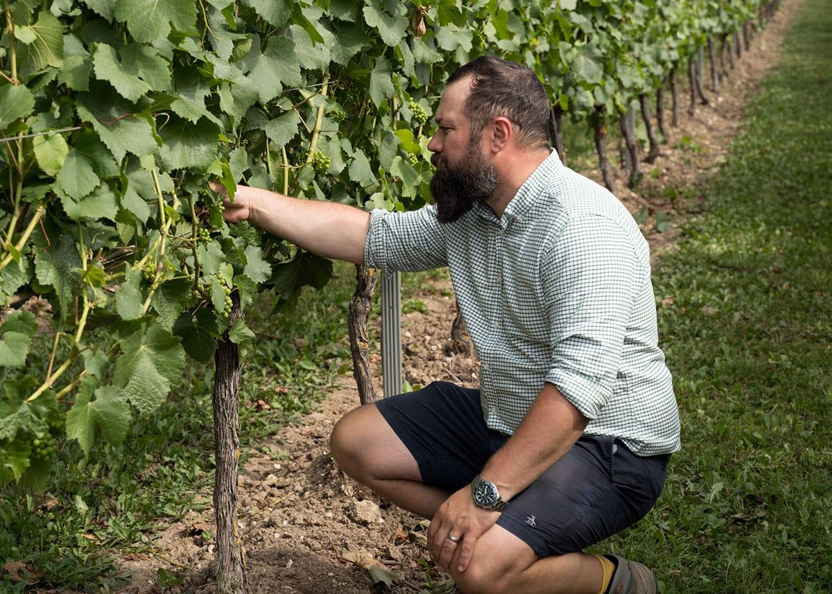 About Vineyard Management - Luke Wolfe