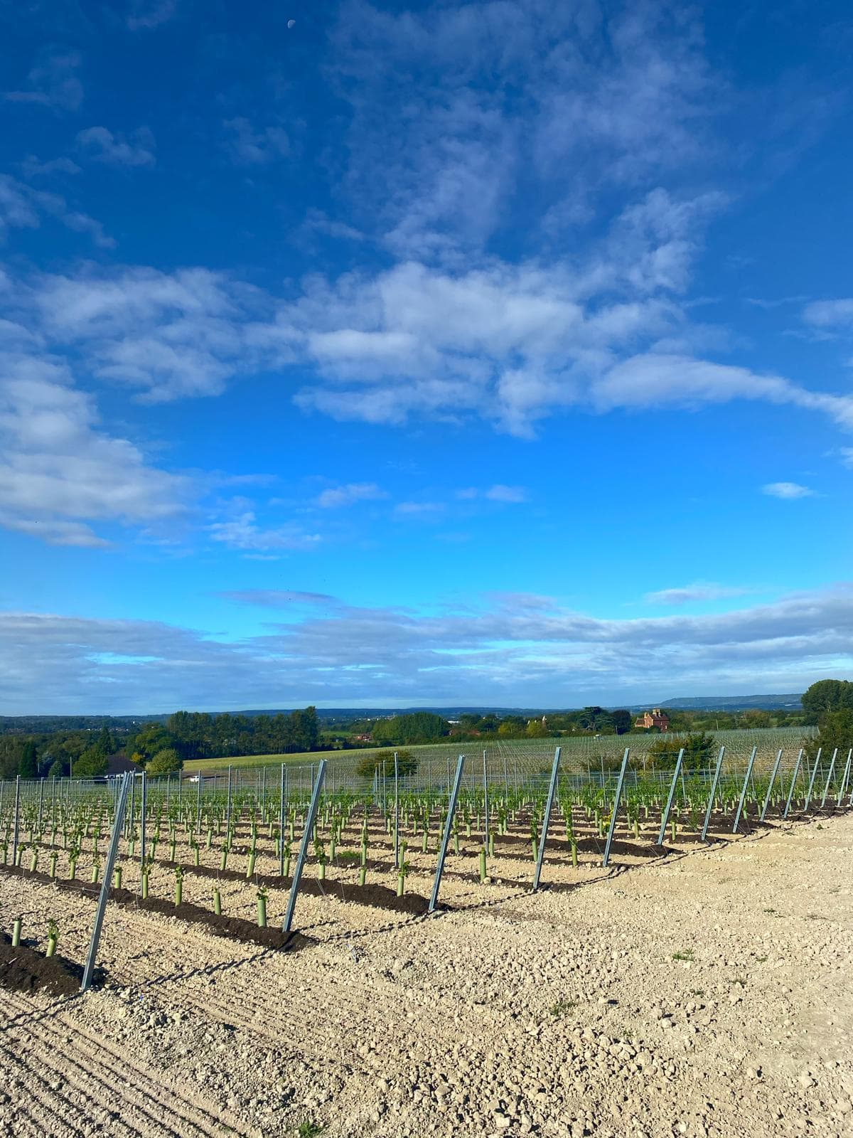 Vineyard Planning & Design