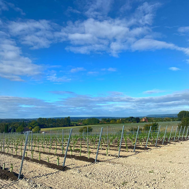 Vineyard Management from Agro-Pro