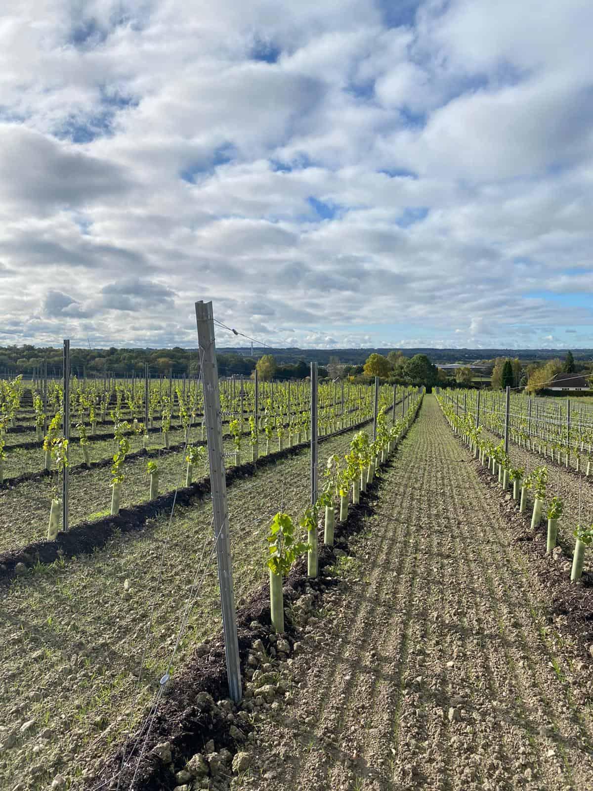 vineyard trellis system