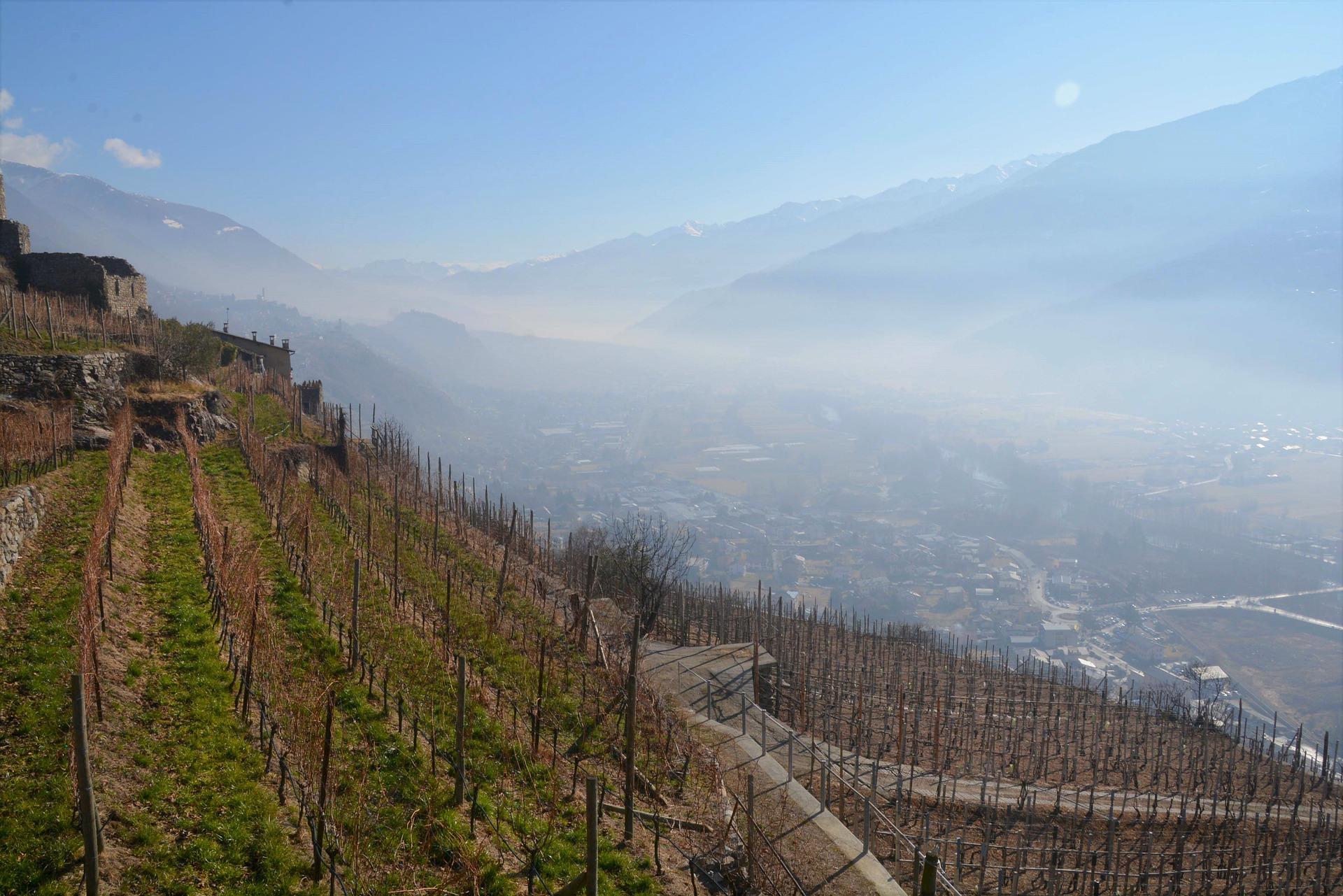 vineyard altitude