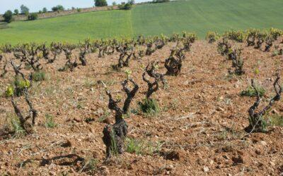 Vineyard Soil – DIRTY TALK