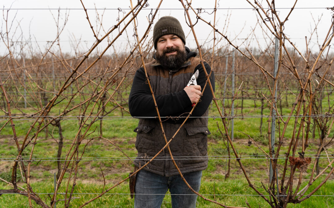 Grapevine Pruning